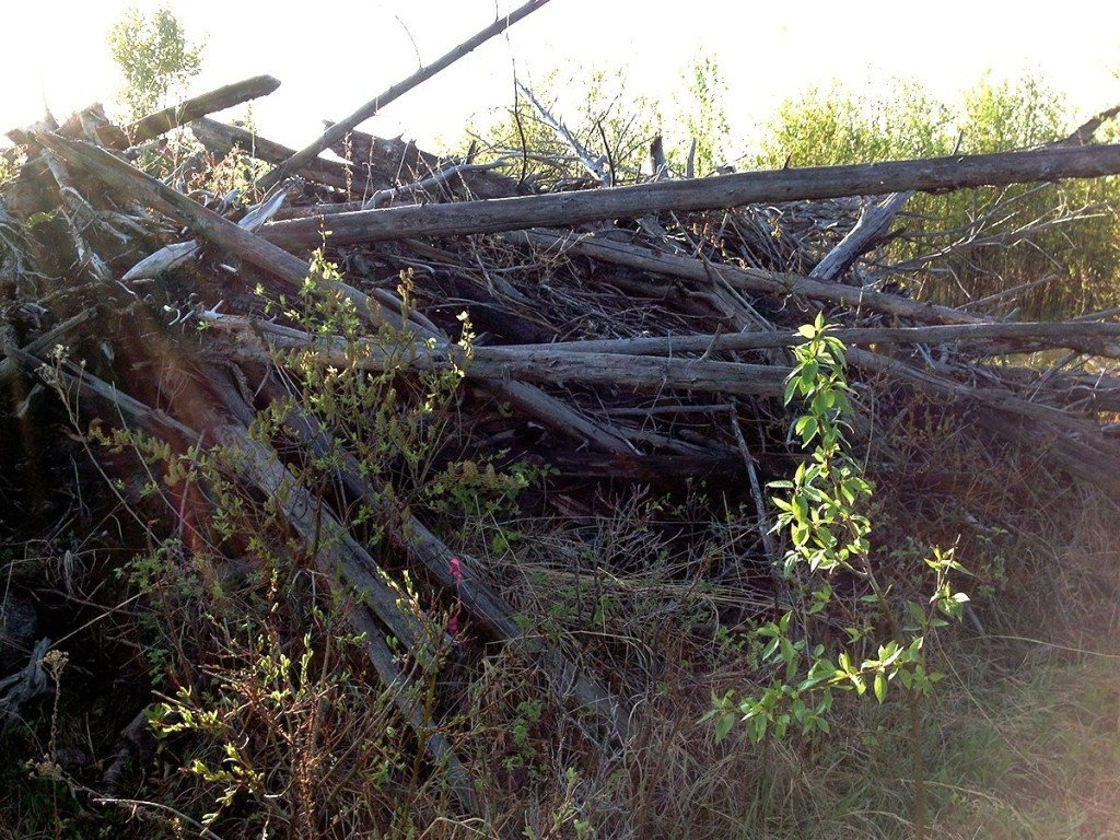 Brush pile, which had to be tallied for woody debris along a transect line.