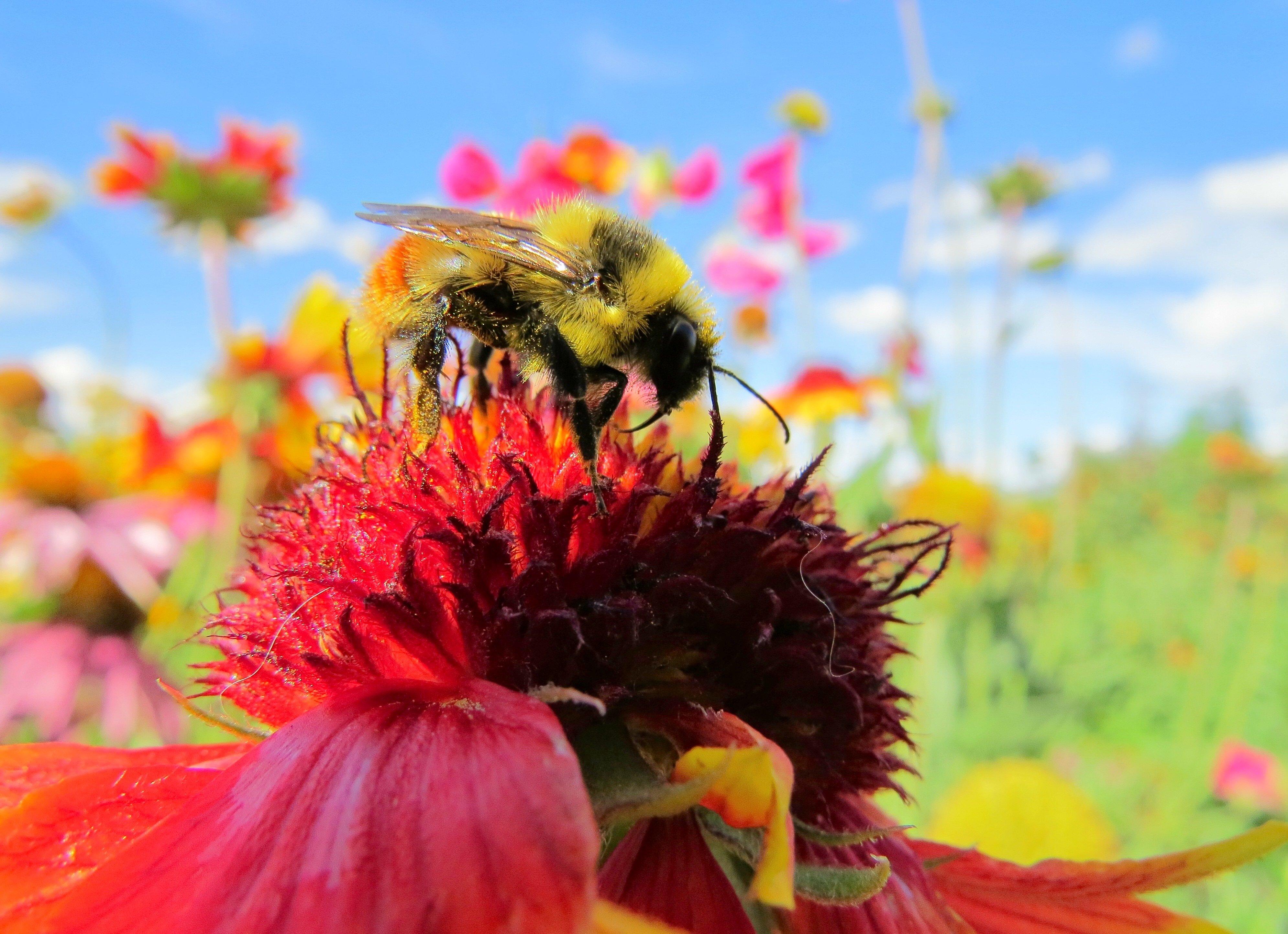 bee flower power