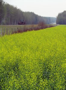 Canola margins