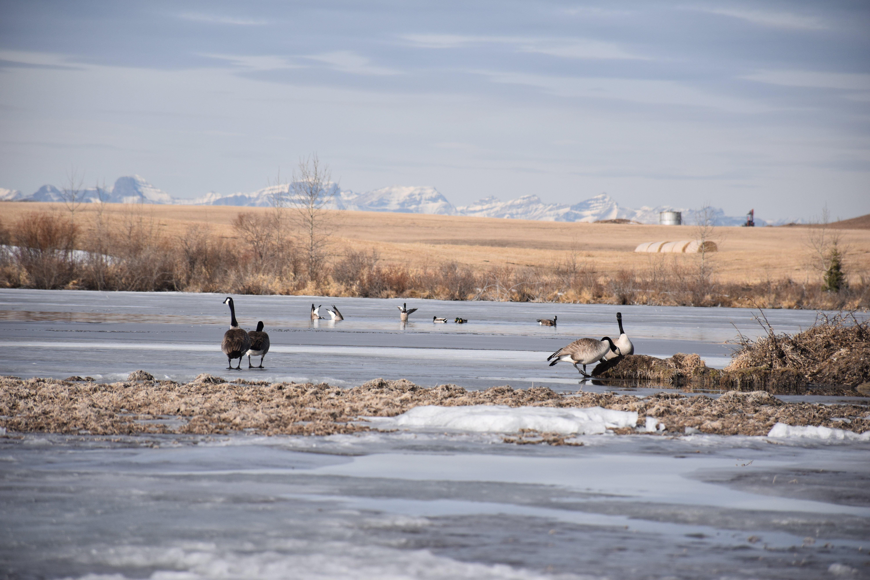 winter morning on the prairie