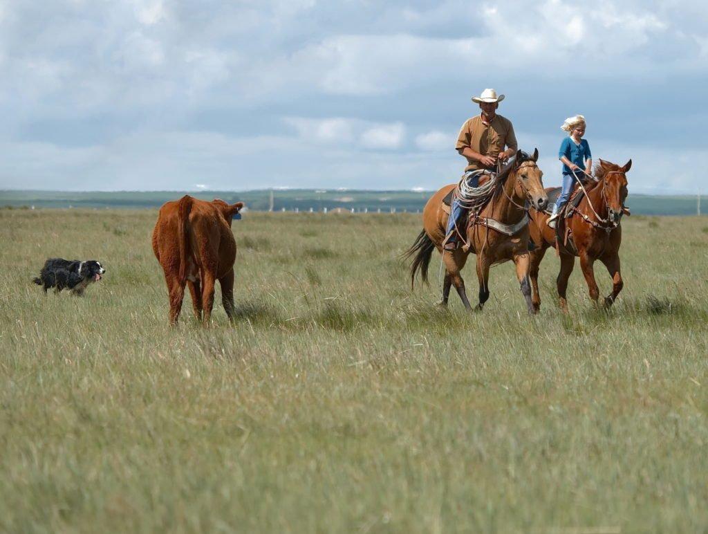 2 ranchers