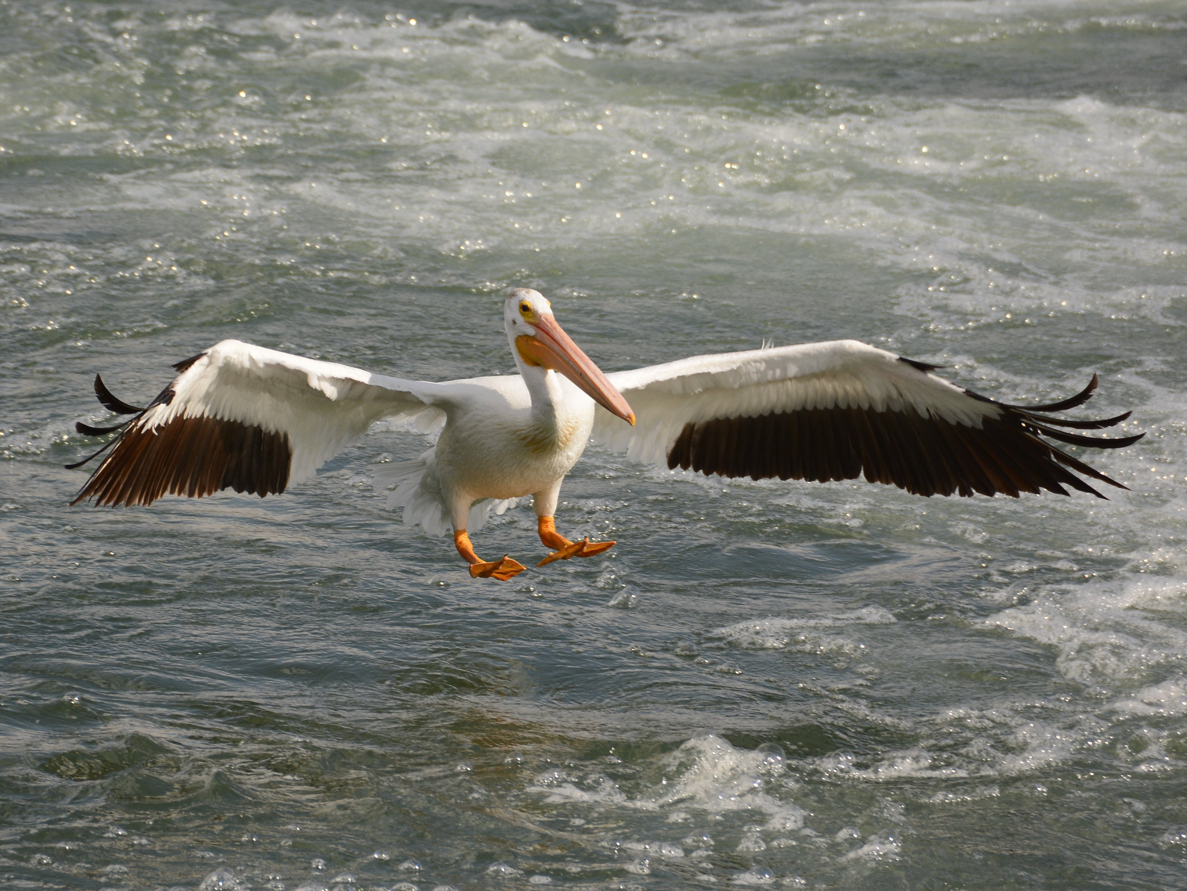 pelican landing at carseland weir