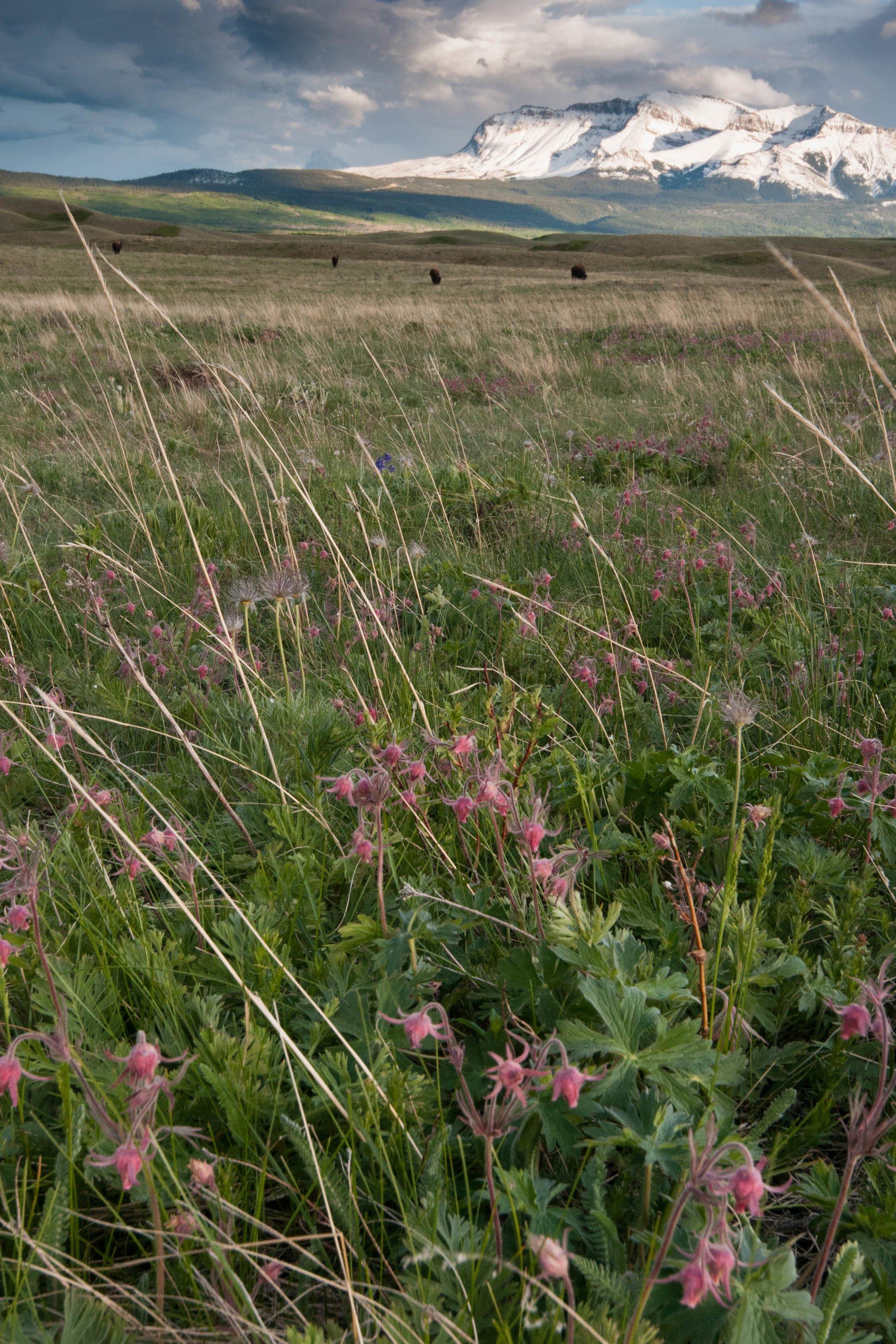 where grasslands meet mountains