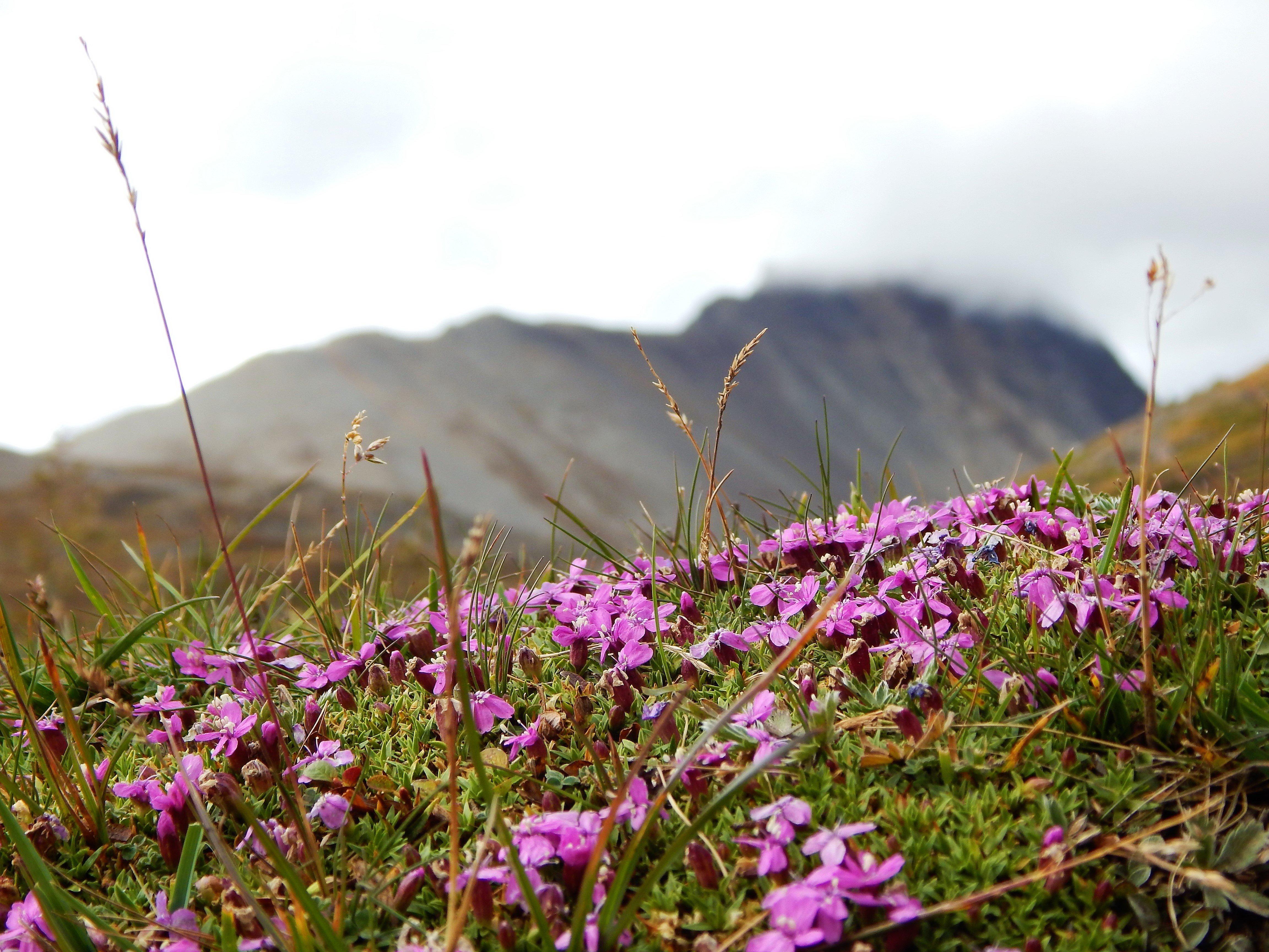 mount wilcox in bloom