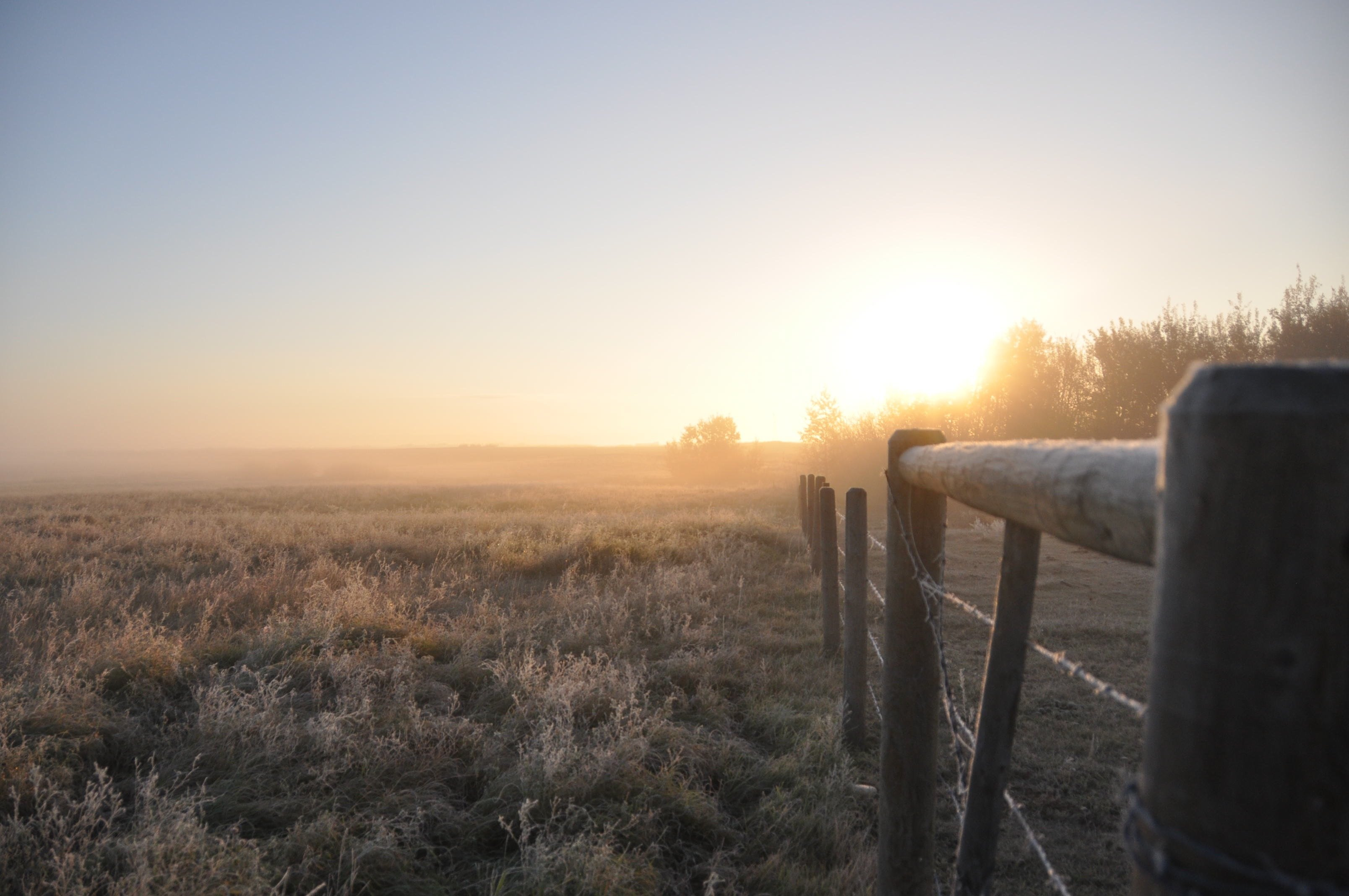 the first frost