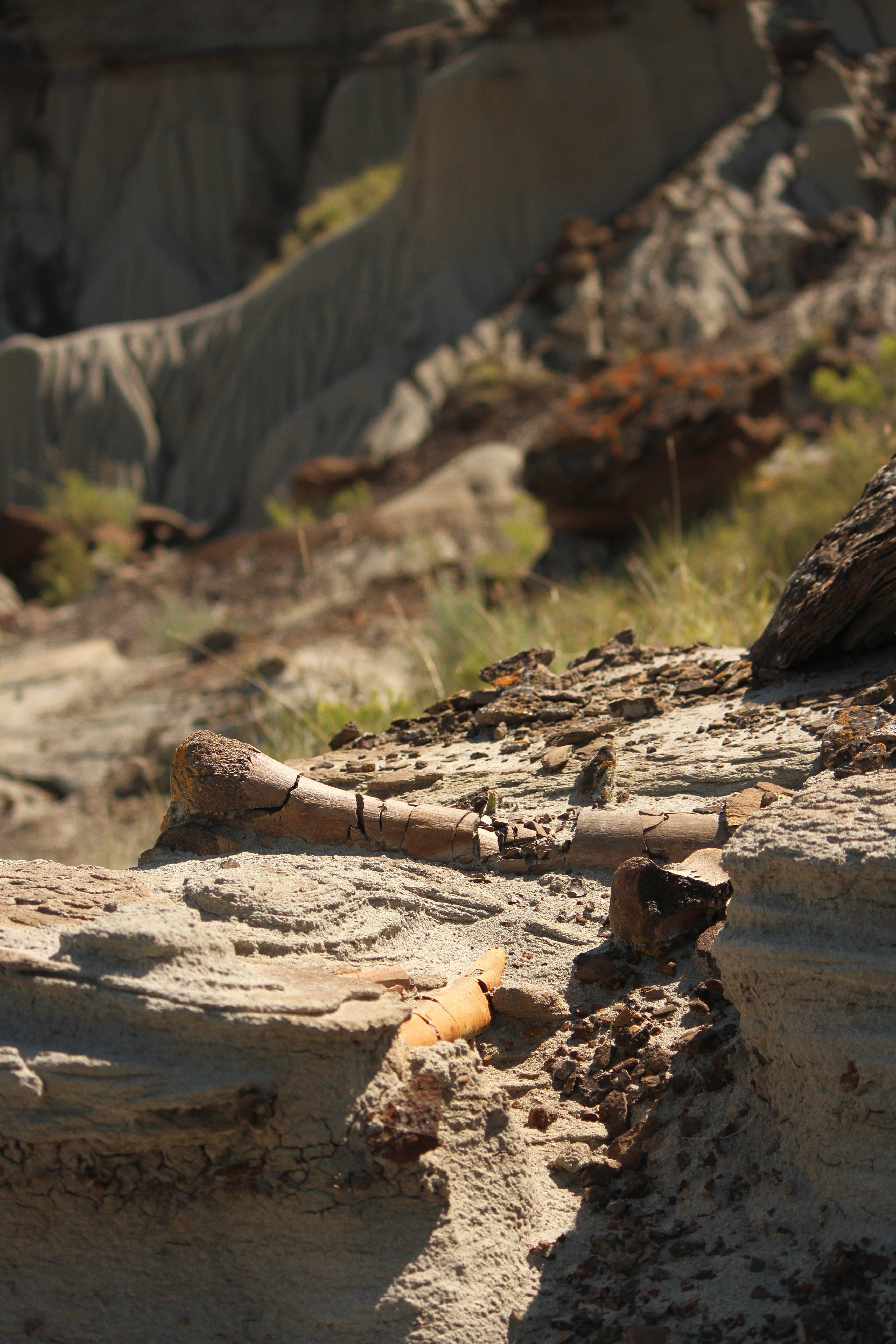 fragile fossil