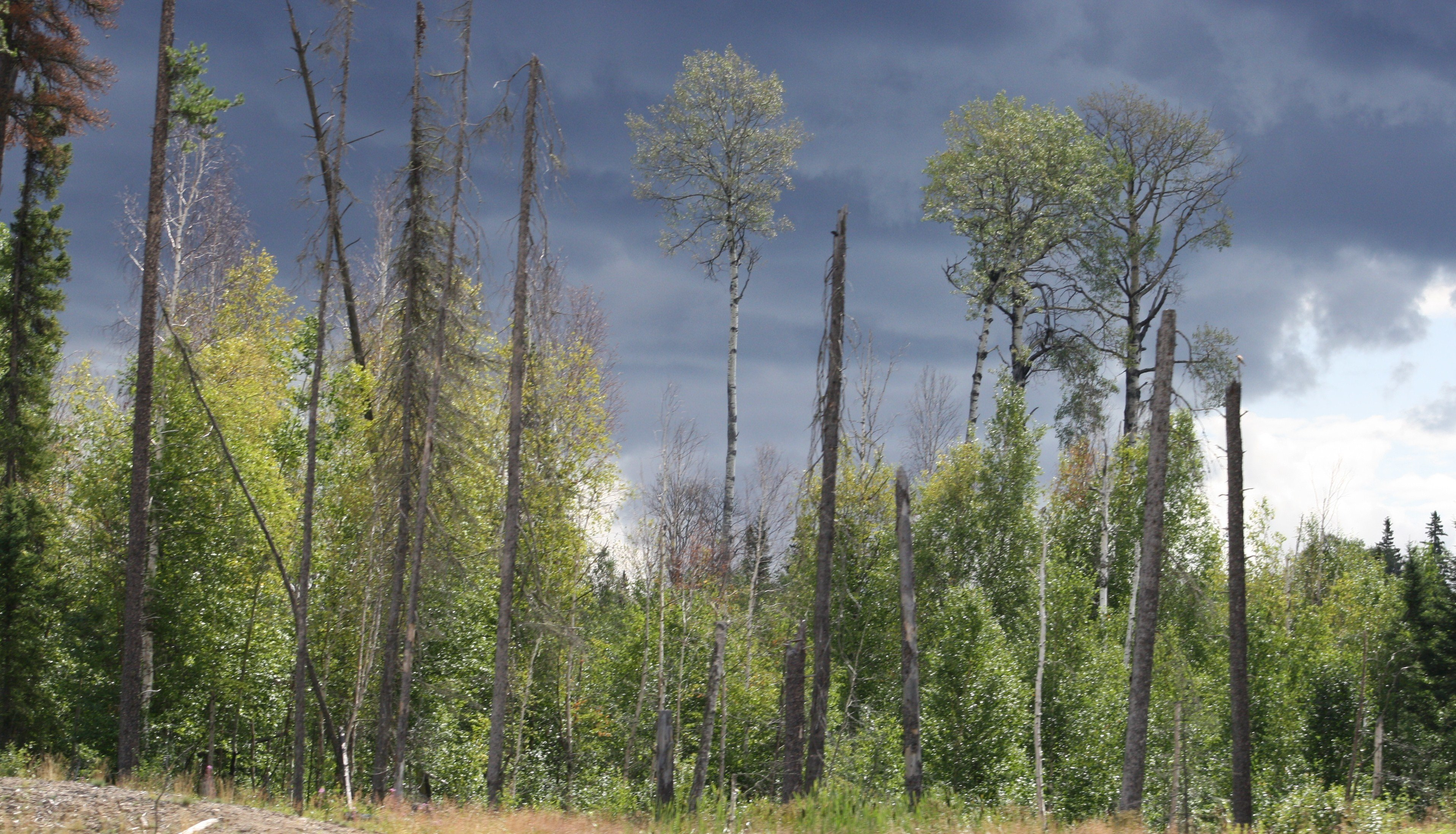 trees under a stormy sky