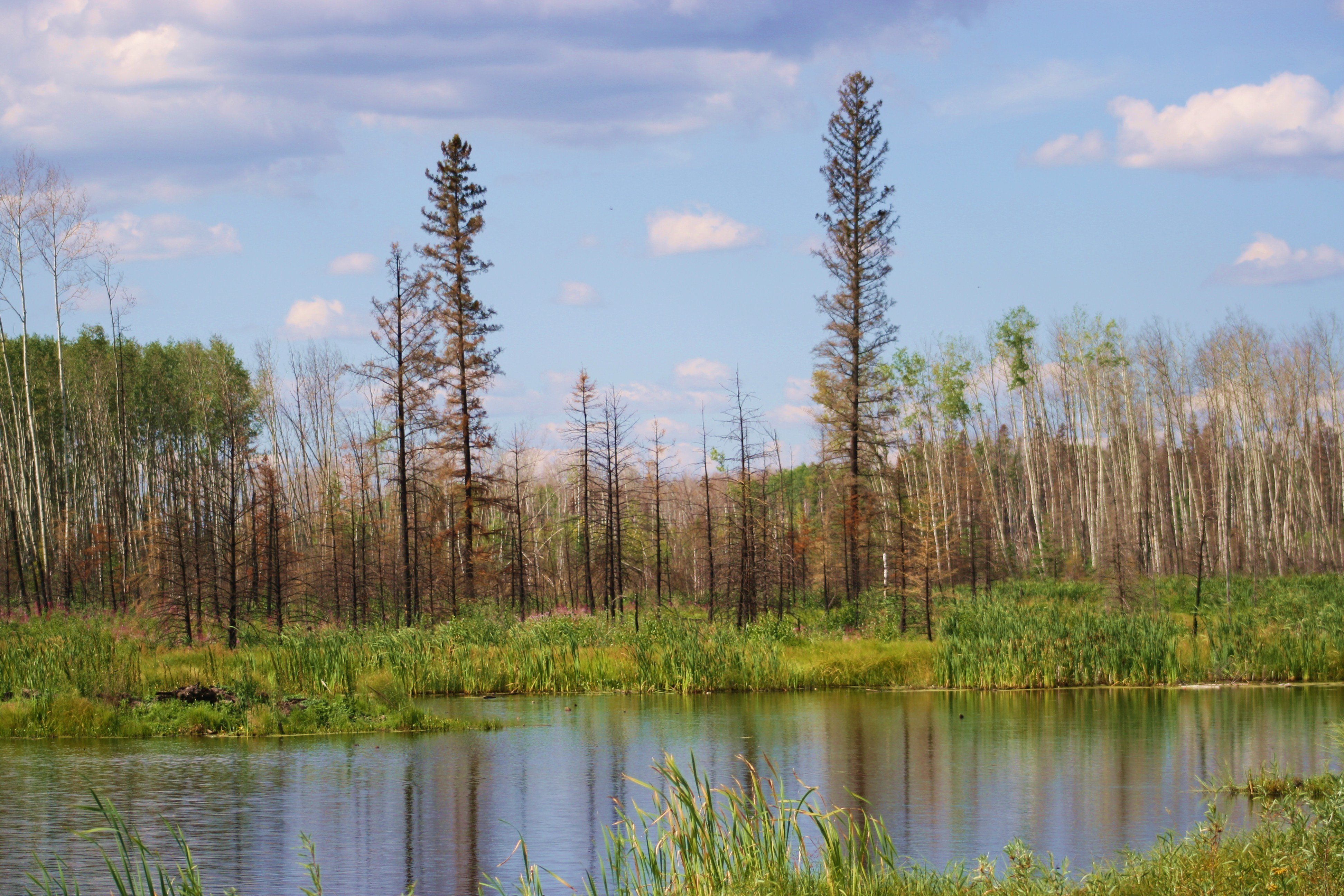 wood buffalo village in fort mcmurray