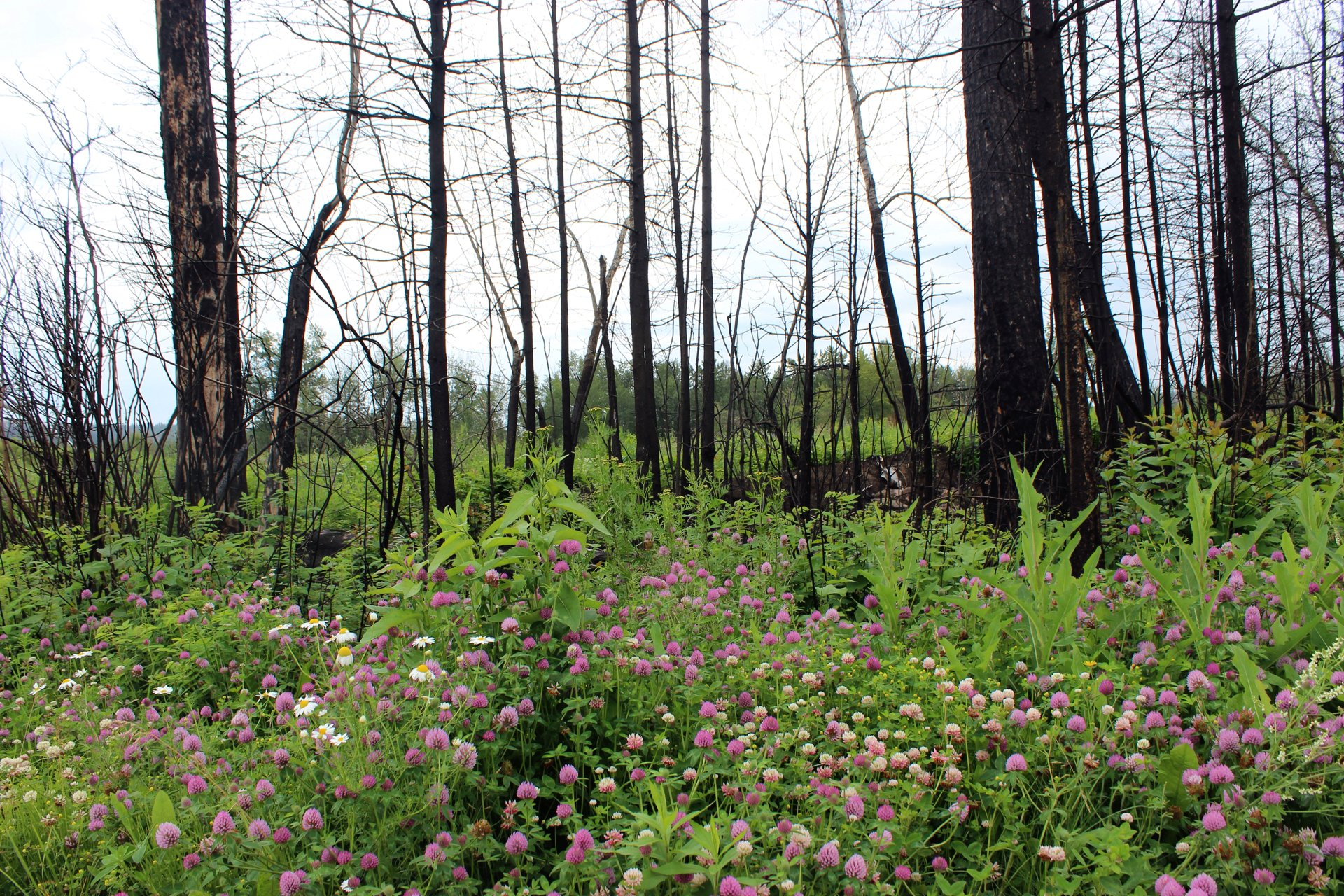 from the ashes hope regrowth